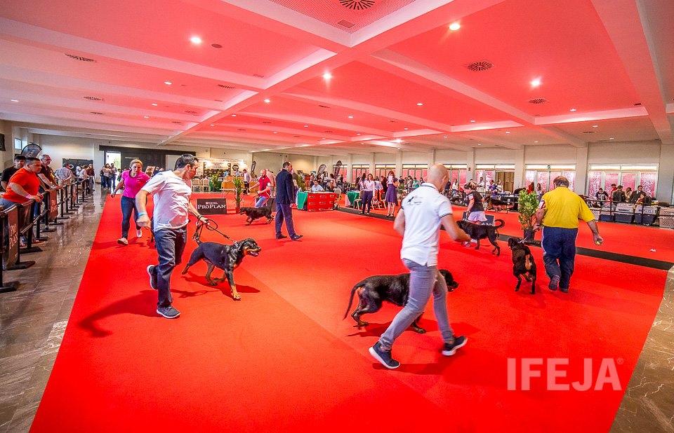 Más de 500 perros y 1.348 visitantes son las cifras que arroja la XXXVIII Exposición Nacional Canina