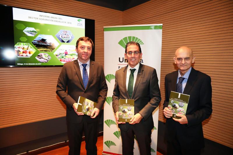 La superficie dedicada al olivar aumenta en 123.352 ha. en Andalucía entre los años 2002 y 2016