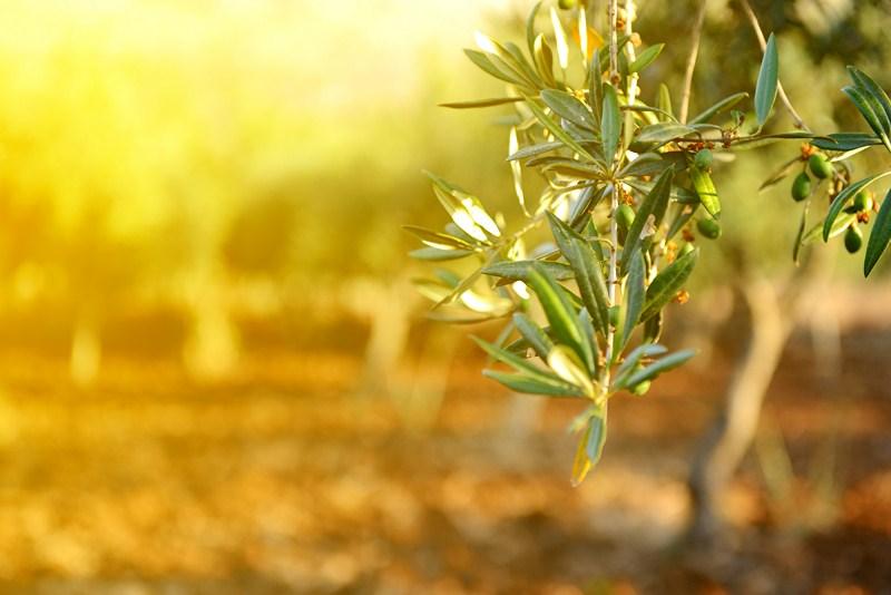 Las más de 6.000 muestras de material vegetal analizadas por Agricultura dan resultado negativo en X