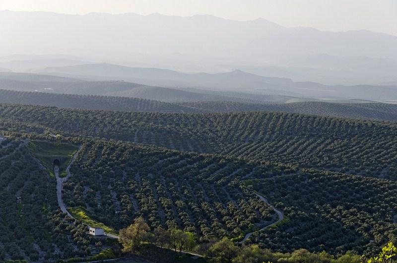 Agricultura ha abonado, con un adelanto de 6 meses, más de 1.100 millones de euros de ayudas PAC 201