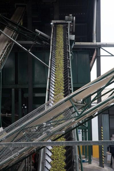 Los resultados de la campaña de aceite de oliva, con más de 911.000 toneladas, confirman la fiabilid