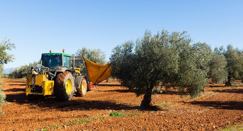 La producción mundial de aceite de oliva para la próxima campaña será de 3,4 millones de toneladas