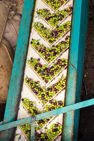 Andalucía inicia la redacción de un plan estratégico para mejorar la competitividad del sector agrar