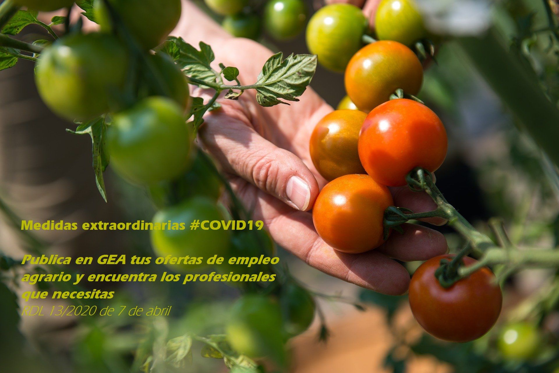 EL SAE amplía su dispositivo para dar cobertura a las demandas de mano de obra del sector agrario