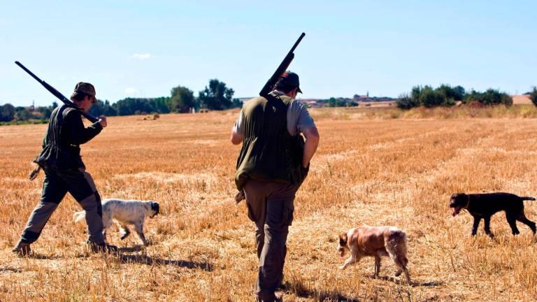 La Junta aprueba medidas cinegéticas excepcionales para evitar los daños causados por el conejo en l